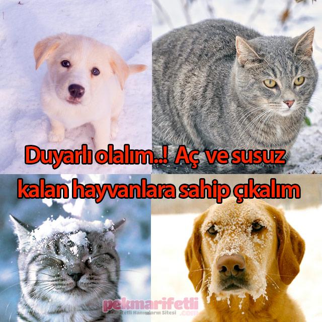 Hayvanları koruyalım..!